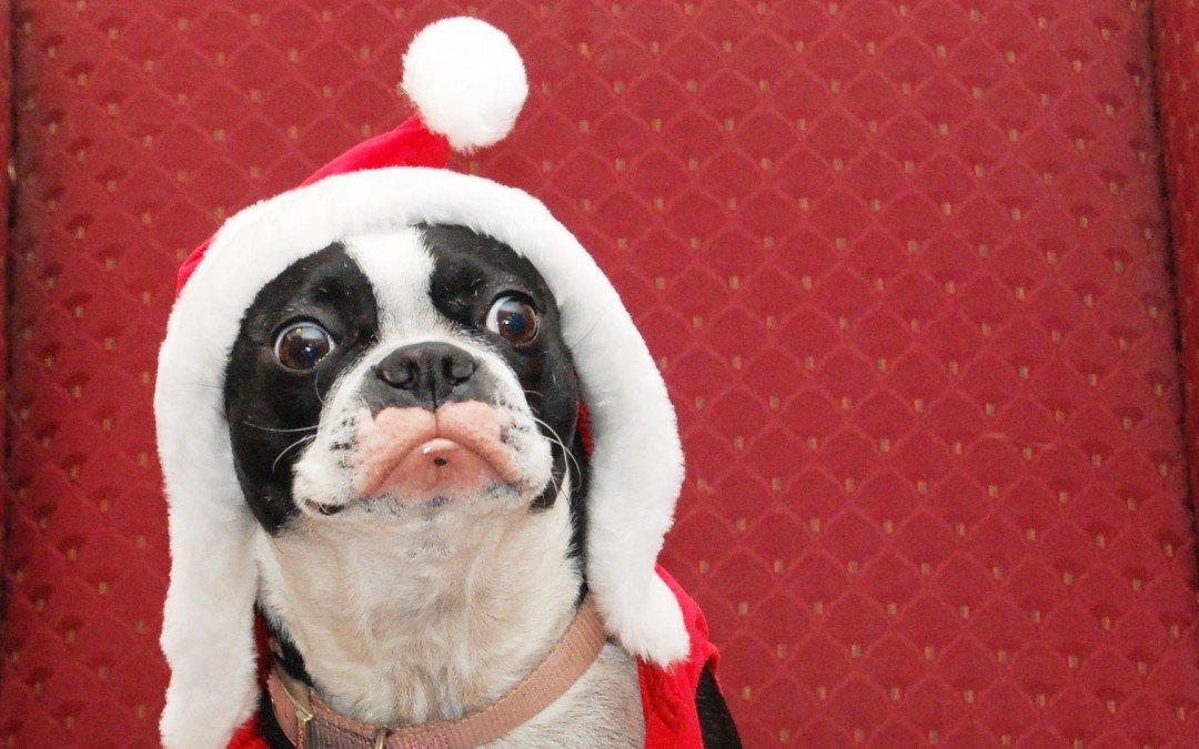 The funniest Christmas GIFs